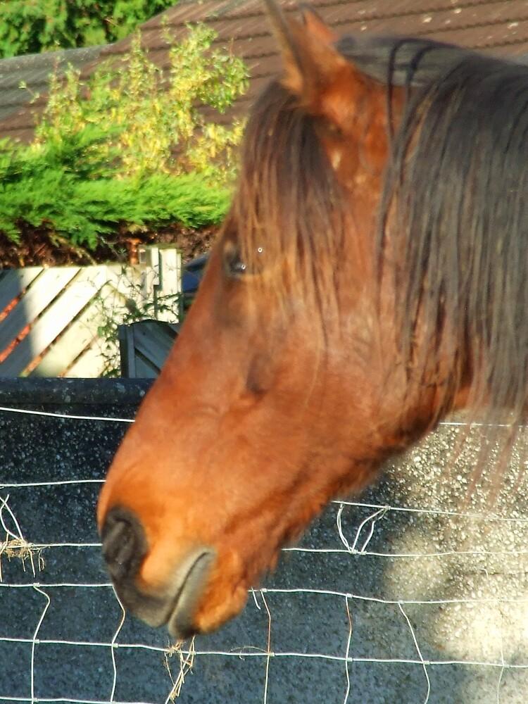 horse by matjenkins
