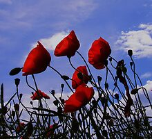 Poppies by Nasibu Mwande