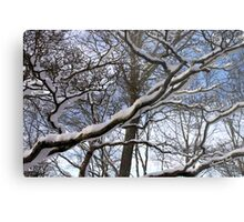 Wrapped in Winter's Cold Embrace Metal Print