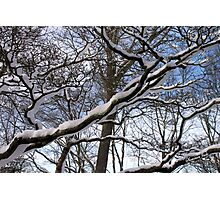Wrapped in Winter's Cold Embrace Photographic Print