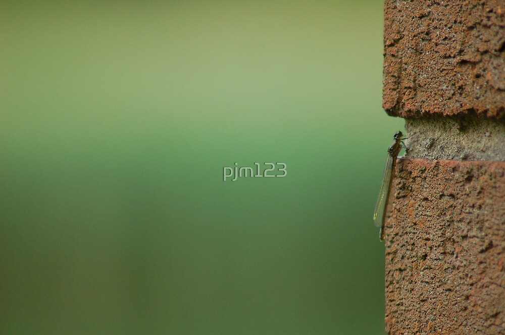 Bricks & Mortar by pjm123