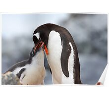 "Gentoo Penguin and Chick ~ ""Meals Home Delivered"" Poster"