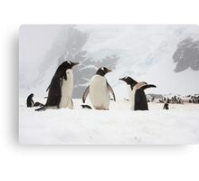 "Gentoo Penguins ~ ""Our World"" Canvas Print"