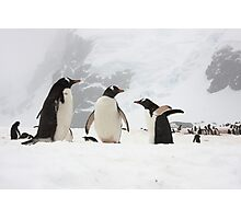 "Gentoo Penguins ~ ""Our World"" Photographic Print"
