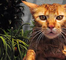 william the (wet) cat by pjwalczak
