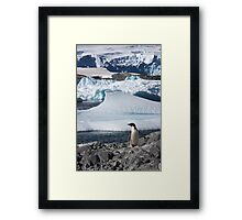 "Adelie Penguin  ~  ""and this is my backyard"" Framed Print"