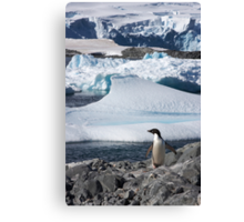 "Adelie Penguin  ~  ""and this is my backyard"" Canvas Print"