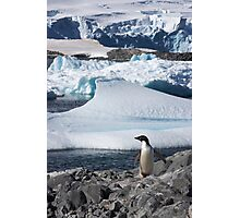 "Adelie Penguin  ~  ""and this is my backyard"" Photographic Print"