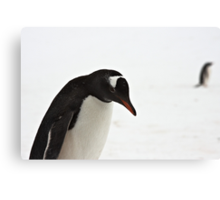 "Gentoo Penguin ~ ""It's a hard life"" Canvas Print"