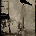 Fake Free by Marko Beslac