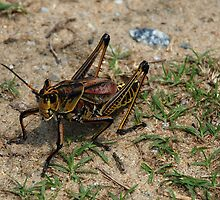 "Grasshopper by Arthur ""Butch"" Petty"