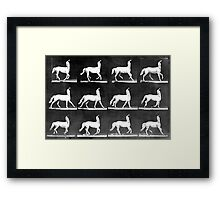 A Study of the Movement of Centaurs (Canter). Framed Print