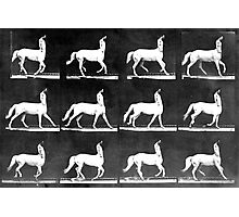 A Study of the Movement of Centaurs (Canter). Photographic Print