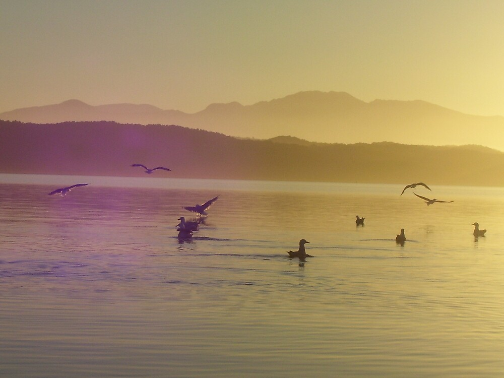 early morning kayak amongst the native birds by gaylene