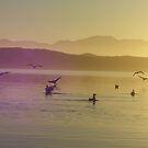early morning kayak amongst the native birds by gaylene