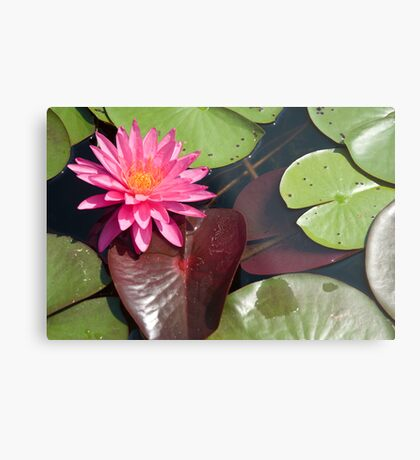 Pink Lilly Metal Print