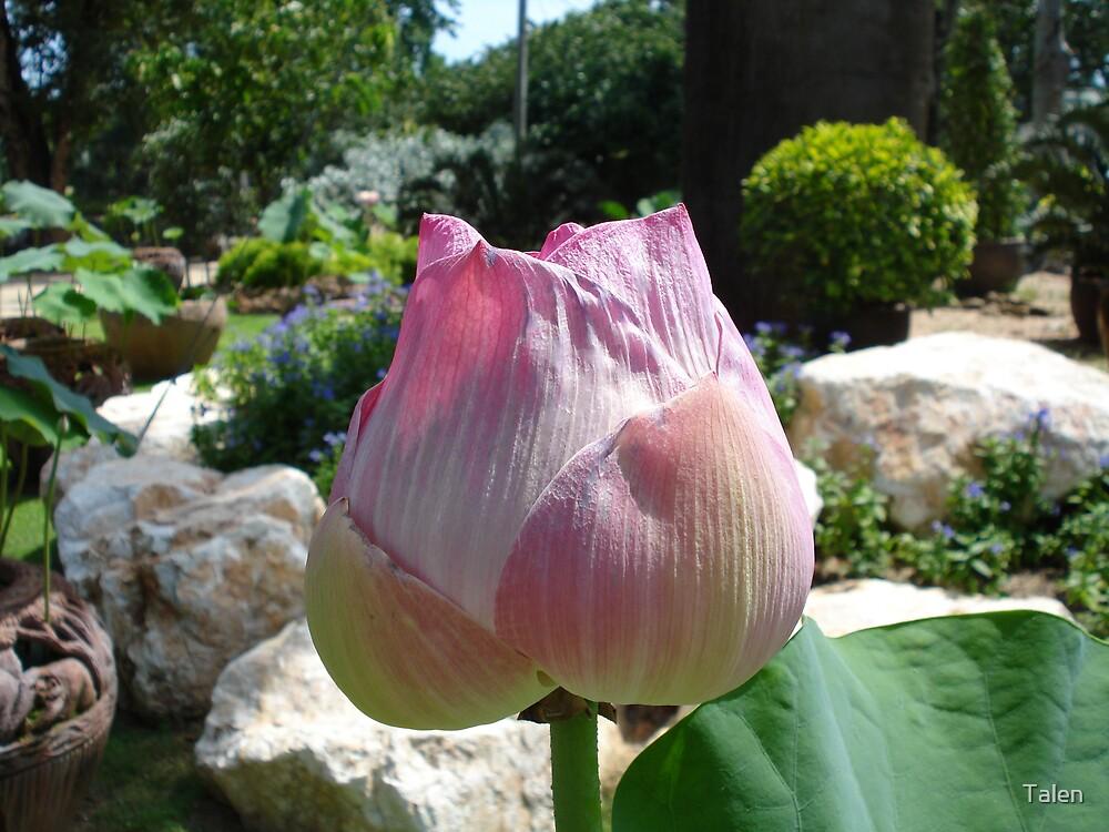 Tropical Flower by Talen