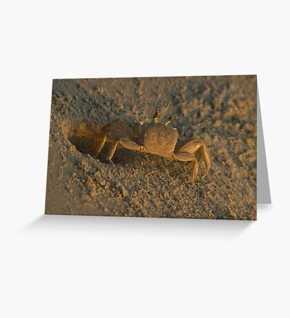 Ghost Crab Greeting Card