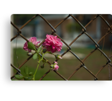 Pastel And Rust Canvas Print