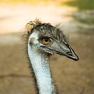 Emu Eyes by Arthur &quot;Butch&quot; Petty