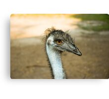 Emu Eyes Canvas Print