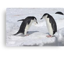 "Chinstrap Penguins ~ ""Konnichiwa (hello)"" Canvas Print"