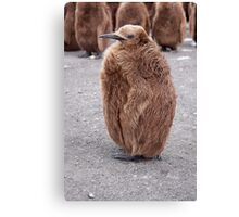 "King Penguin chick ~ ""Mirror Mirror on the wall, who's the........"" Canvas Print"