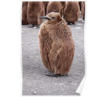 "King Penguin chick ~ ""Mirror Mirror on the wall, who's the........"" Poster"