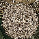 Starburst by Eileen McVey