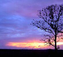 Dawn This Morning by Suni Pruett