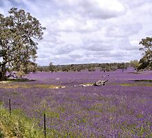 Barossa Valley II by gypsygirl