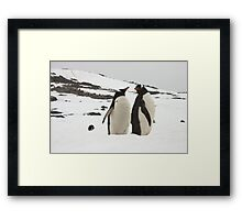 "Gentoo Penguins ~ ""Life in the Freezer"" Framed Print"