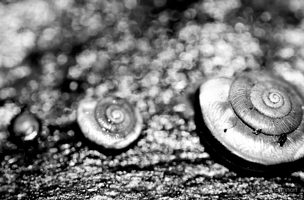 Snails by three by Justine Gannon