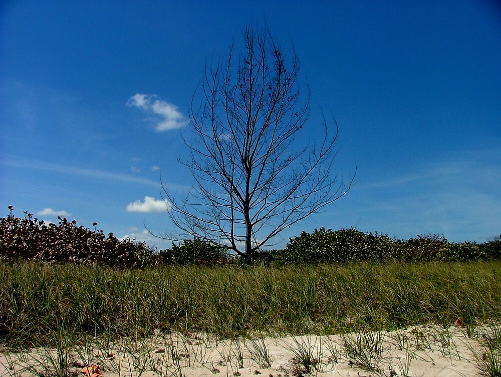 Lonely Tree on the Beach by Ferguson