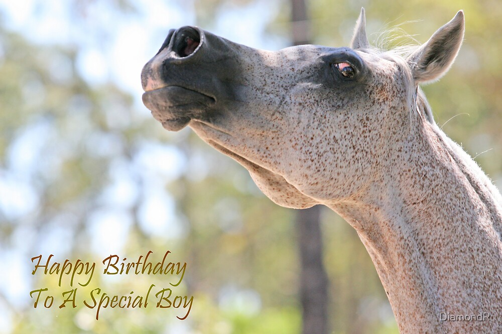 Naazanikil Boy Birthday by DiamondR
