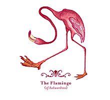 Flamingo of Awkwardness Photographic Print