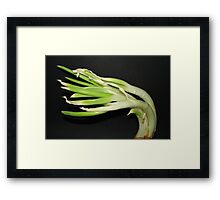 Sprouting Onion. Framed Print