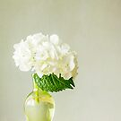 White Hydrangea by Colleen Farrell