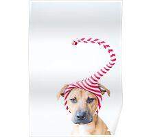 Christmas Elf Dog Poster