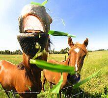 HORSE'N ROUND... by Jarrod Lees