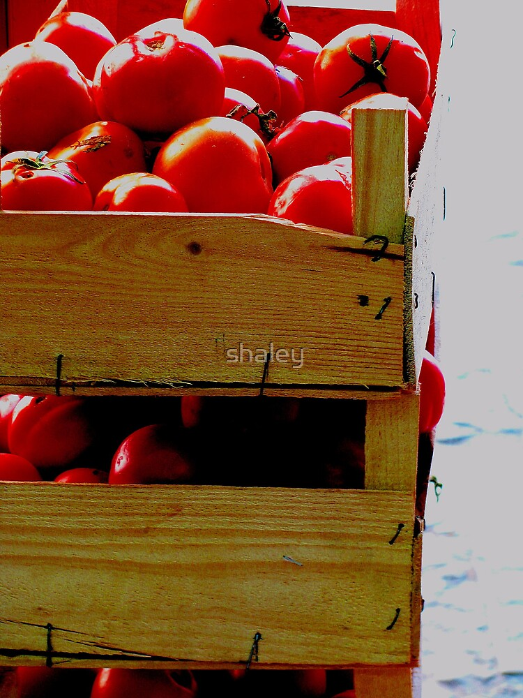 Tomato Box by shaley