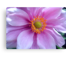 Pretty Pastels! Canvas Print