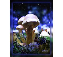 A Small World! Photographic Print