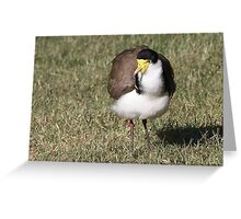 """Masked Lapwing (Spur-winged Plover) ~ """"Dagger Drawn""""  Greeting Card"""
