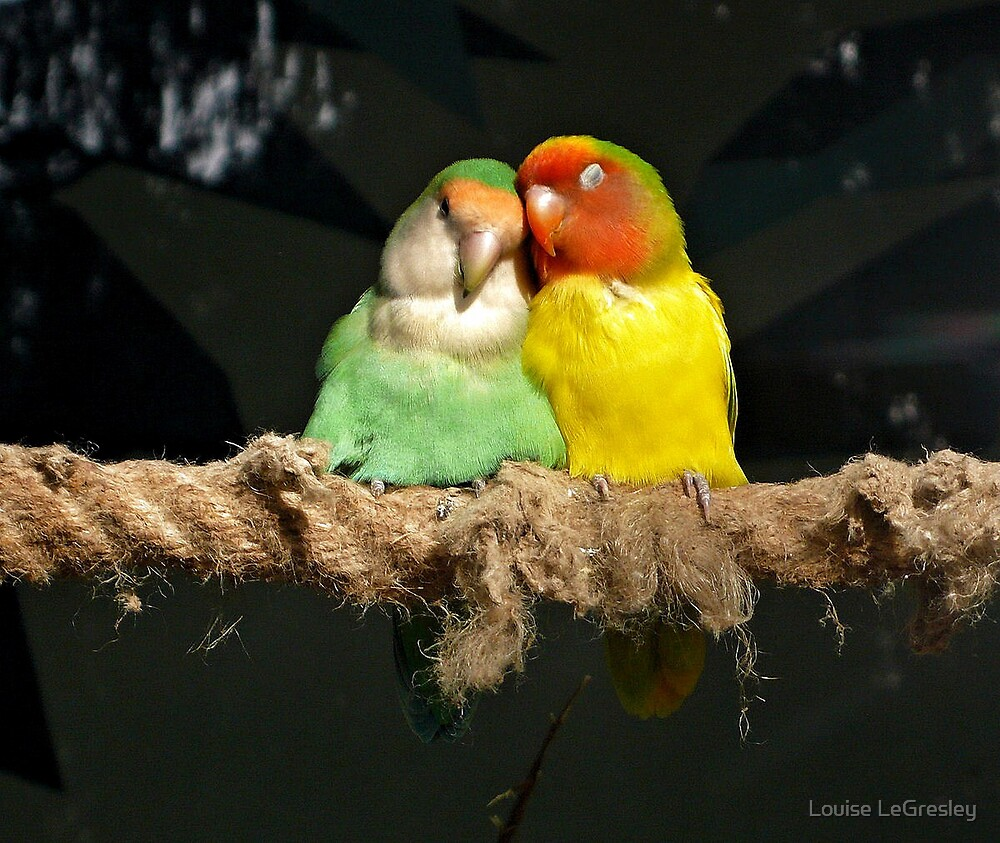 Love birds... by Louise LeGresley
