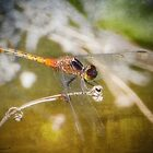 Dragonfly digital art 01 by kevin chippindall