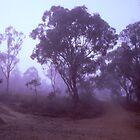 Fog by Ben Ryan