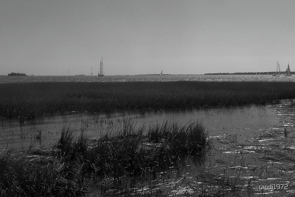 marsh by randi1972