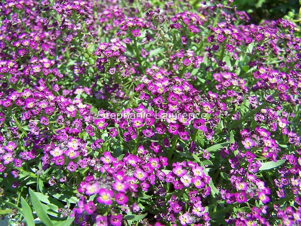 Garden Flowers by Stephanie Lawrence