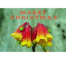 Australian Christmas Bells Photographic Print